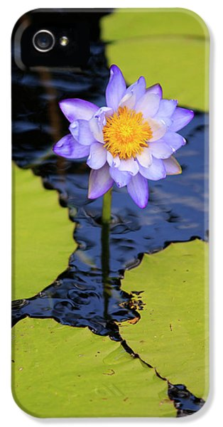 Far North Queensland iPhone 5s Case - A Bright Purple Water Lily by Paul Dymond
