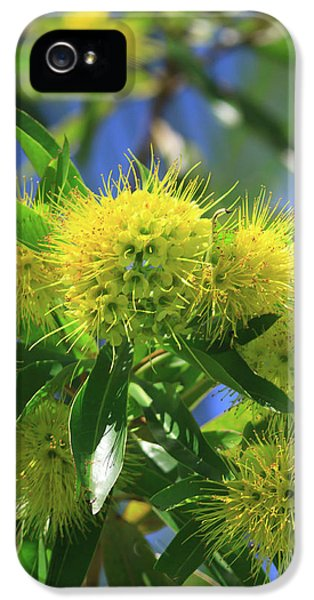 Far North Queensland iPhone 5s Case - A Bright Yellow Wattle Tree In Suburban by Paul Dymond