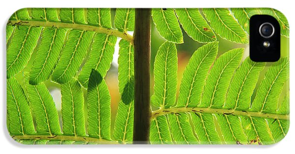 Far North Queensland iPhone 5s Case - A Close-up Detail Of A Fern by Paul Dymond
