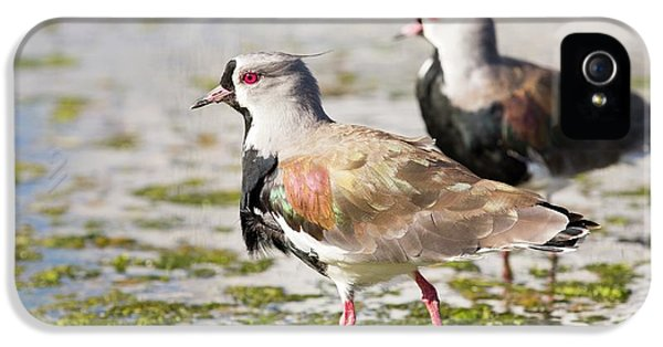 A Flock Of Southern Lapwings IPhone 5s Case