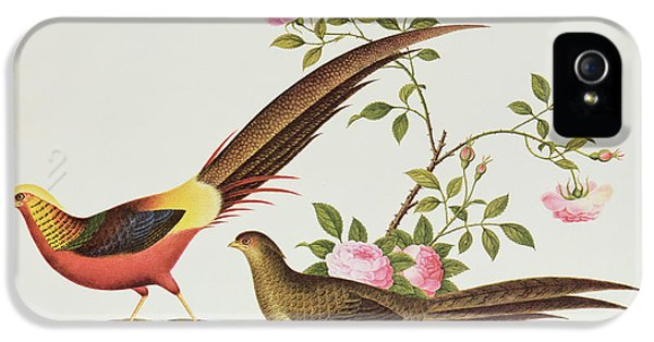 A Golden Pheasant IPhone 5s Case by Chinese School