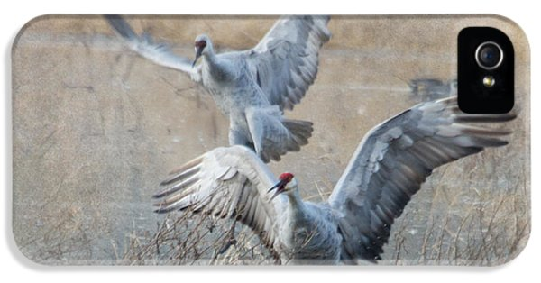 Crane iPhone 5s Case - A Grand Entrance by Angie Vogel