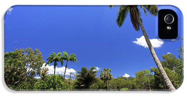 Far North Queensland iPhone 5s Case - A Palm Tree On The Shore Of The Salt by Paul Dymond