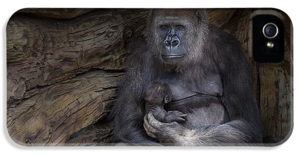 Gorilla iPhone 5s Case - A Special Moment by Larry Marshall