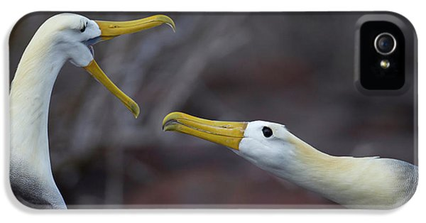 Albatross iPhone 5s Case - A Wave Albatross Couple In A Courtship by Peter Essick