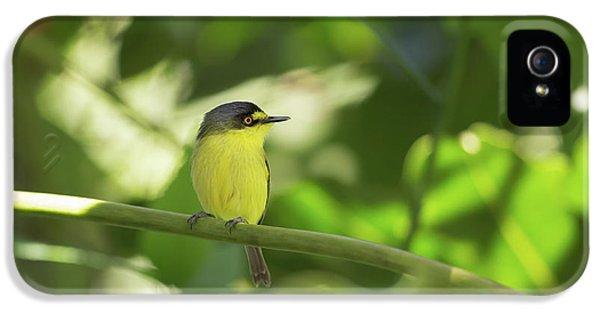 Flycatcher iPhone 5s Case - A Yellow-lored Tody Flycatcher by Alex Saberi