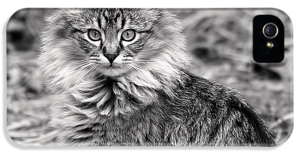 A Young Maine Coon IPhone 5s Case