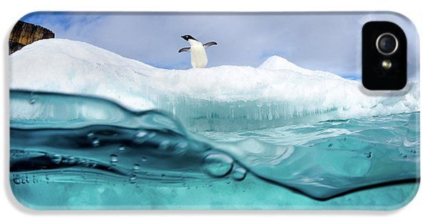 Penguin iPhone 5s Case - Adelie Penguin On Iceberg by Justin Hofman