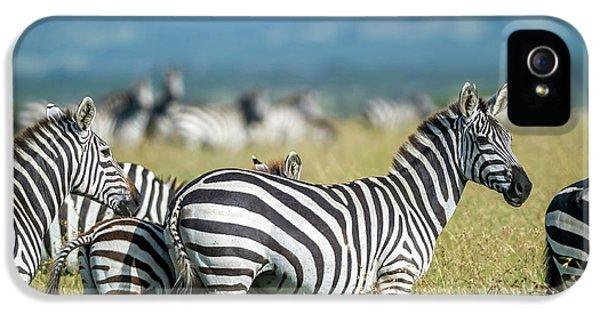 Zebra iPhone 5s Case - Africa, Tanzania, Zebras by Lee Klopfer