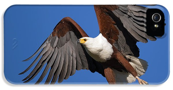 Eagle iPhone 5s Case - African Fish Eagle by Johan Swanepoel