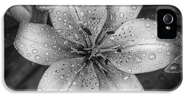 Lily iPhone 5s Case - After The Rain by Scott Norris