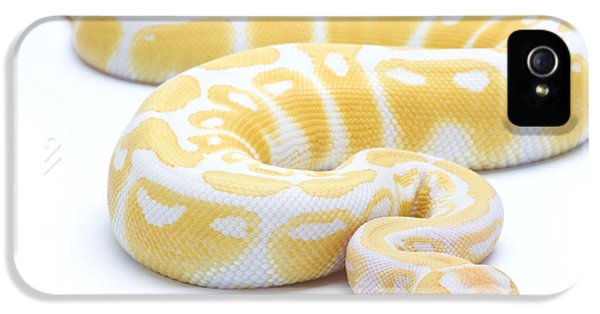 Albino Royal Python IPhone 5s Case by Michel Gunther