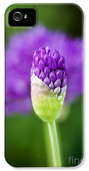 Allium Hollandicum Purple Sensation IPhone 5s Case