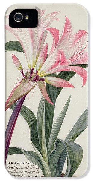 Lily iPhone 5s Case - Amaryllis Belladonna, 1761 by Georg Dionysius Ehret