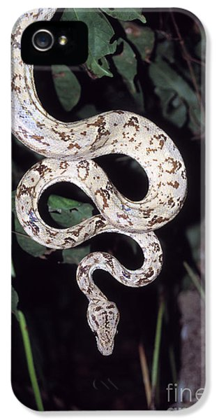 Amazon Tree Boa IPhone 5s Case by James Brunker