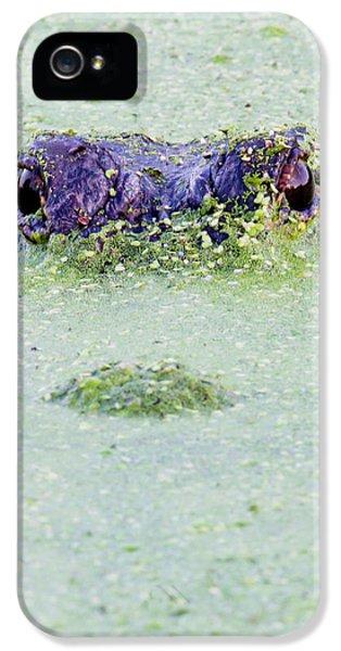 Alligator iPhone 5s Case - American Alligator, Alligator by Larry Ditto