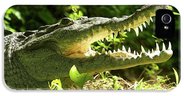 Crocodile iPhone 5s Case - American Crocodile (crocodylus Acutus by Andres Morya Hinojosa