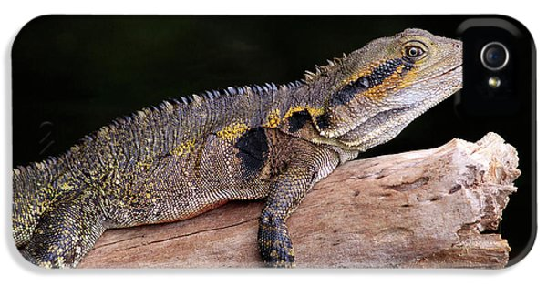 Far North Queensland iPhone 5s Case - An Eastern Water Dragon (eastern Water by Paul Dymond