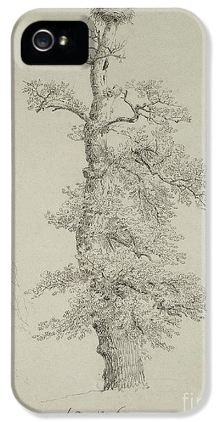 Ancient Oak Tree With A Storks Nest IPhone 5s Case