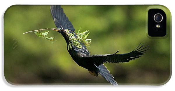 Anhinga IPhone 5s Case