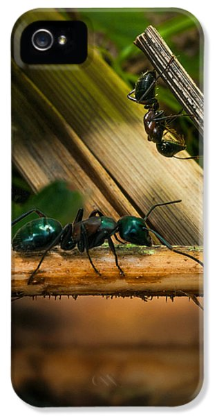 Ants Adventure 2 IPhone 5s Case by Bob Orsillo