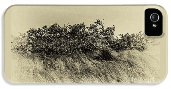 Apollo Beach Grass IPhone 5s Case