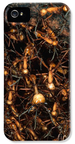 Army Ant Bivouac Site IPhone 5s Case by Gregory G. Dimijian, M.D.