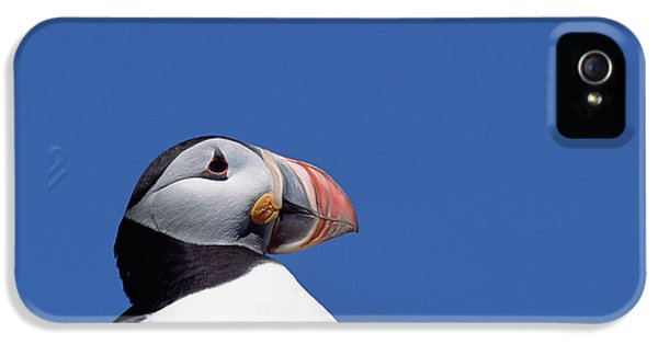 Atlantic Puffin In Breeding Colors IPhone 5s Case by Yva Momatiuk and John Eastcott