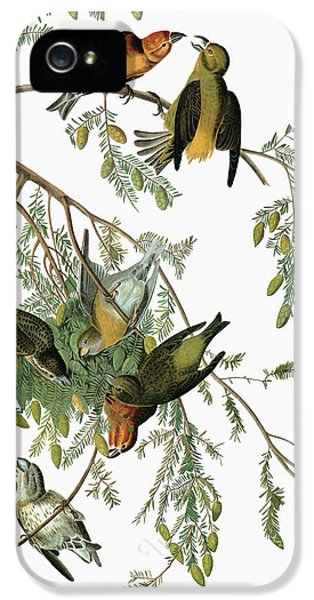 Audubon Crossbill IPhone 5s Case by Granger