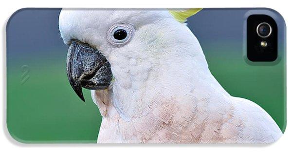 Australian Birds - Cockatoo IPhone 5s Case