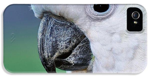 Australian Birds - Cockatoo Up Close IPhone 5s Case