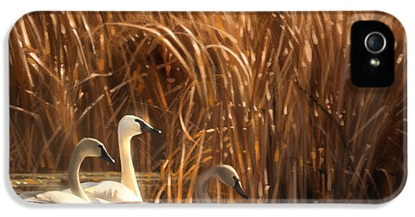 Swan iPhone 5s Case - Autumn Light- Trumpeter Swans by Aaron Blaise