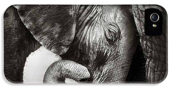 Elephant iPhone 5s Case - Baby Elephant Seeking Comfort by Johan Swanepoel