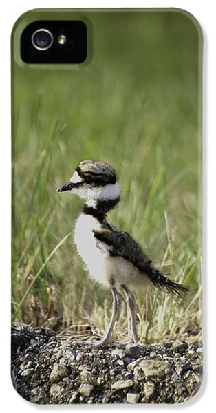 Baby Killdeer 2 IPhone 5s Case