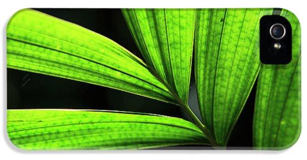 Far North Queensland iPhone 5s Case - Backlit Rainforest Plants Create by Paul Dymond