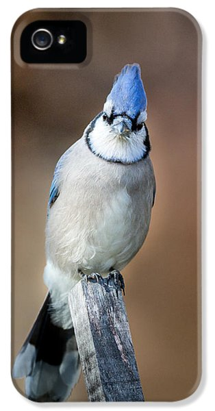 Backyard Birds Blue Jay IPhone 5s Case by Bill Wakeley