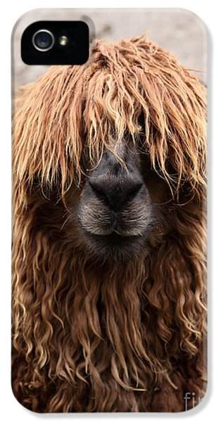 Bad Hair Day IPhone 5s Case by James Brunker