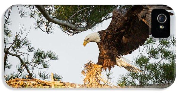 Bald Eagle Building Nest IPhone 5s Case