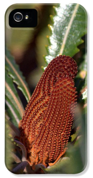 IPhone 5s Case featuring the photograph Banksia by Miroslava Jurcik
