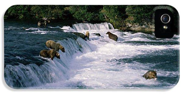 Bears Fish Brooks Fall Katmai Ak IPhone 5s Case