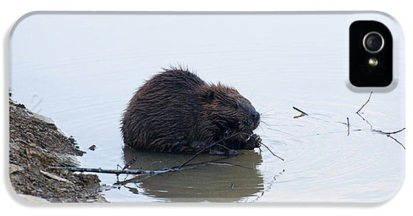 Beaver In The Shallows IPhone 5s Case by Chris Flees