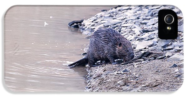 Beaver On Dry Land IPhone 5s Case