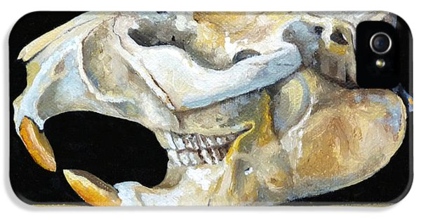Beaver Skull 1 IPhone 5s Case by Catherine Twomey