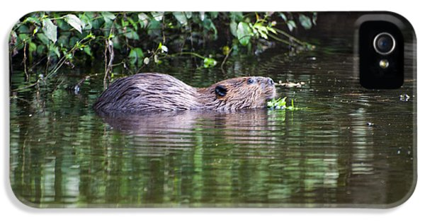 beaver swims in NC lake IPhone 5s Case by Chris Flees