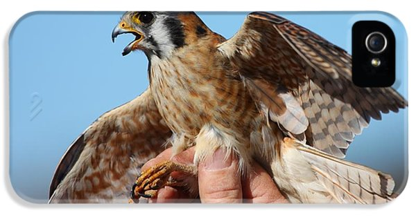IPhone 5s Case featuring the photograph Behold The American Kestrel by Nathan Rupert
