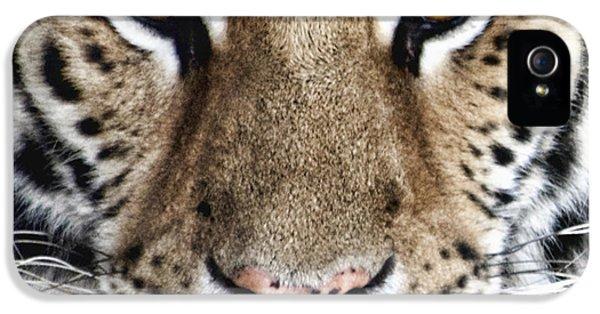 Bengal Tiger Eyes IPhone 5s Case by Tom Mc Nemar