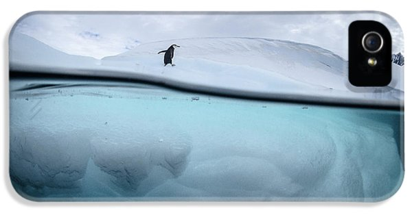 Penguin iPhone 5s Case - Between Two Worlds - Facing Change by Justin Hofman