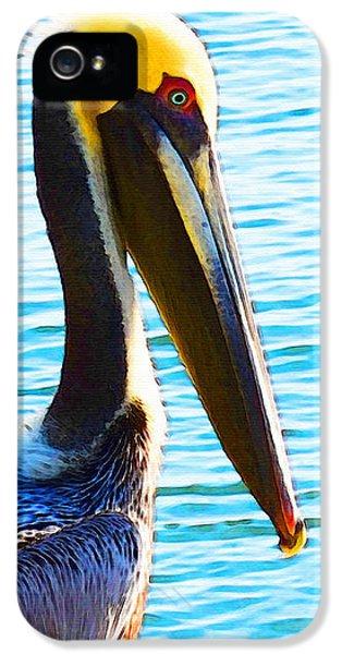 Big Bill - Pelican Art By Sharon Cummings IPhone 5s Case by Sharon Cummings