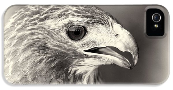 Bird Of Prey IPhone 5s Case
