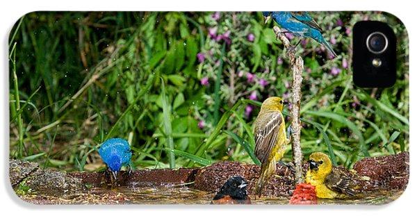 Birds Bathing IPhone 5s Case by Anthony Mercieca